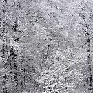 Winter woods by bertspix