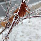 Maple Christmas  by ArtbyDigman