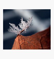 Flake Photographic Print