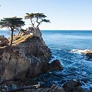 Lone Cypress Tree in 17 Mile Drive by Hotaik  Sung
