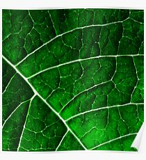 LEAF STRUCTURE GREENERY no2 Poster