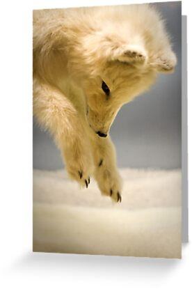 Arctic fox by Arek Rainczuk