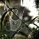 A Mornings Webb by velveteagle