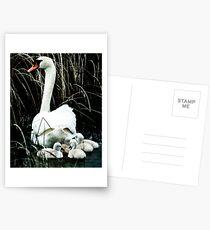 Following mom II Postcards