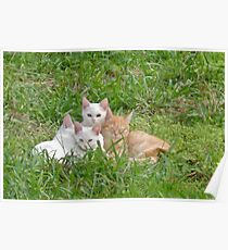 Cuddly kittens Poster