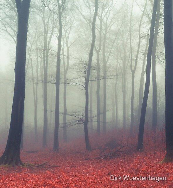 Sound of Fog by Dirk Wuestenhagen