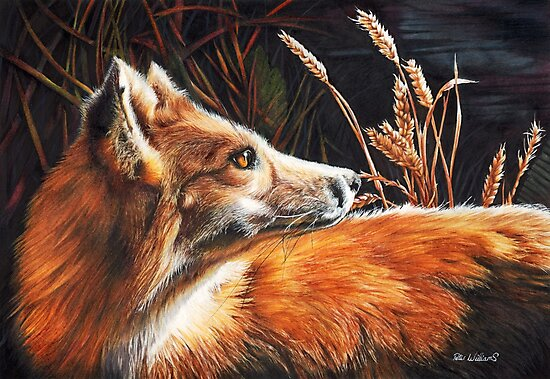 For Fox Sake by Peter Williams