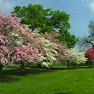Springtime in the City  by LizzieMorrison