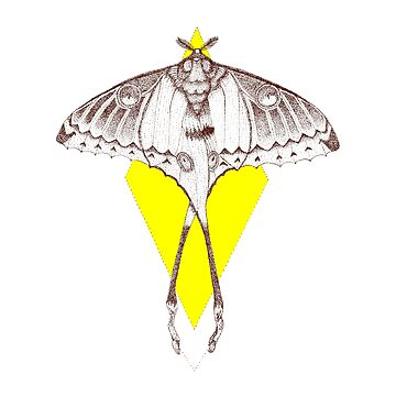 Comet Moth by anxlih