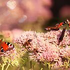 Butterflies Gathering Pink by Snaret