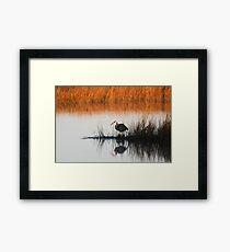 Heron in the morning Framed Print