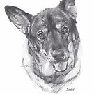 Old herding dog drawing by Mike Theuer