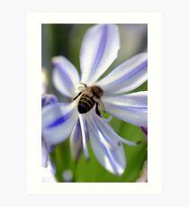 Bumble Bee Bum Art Print