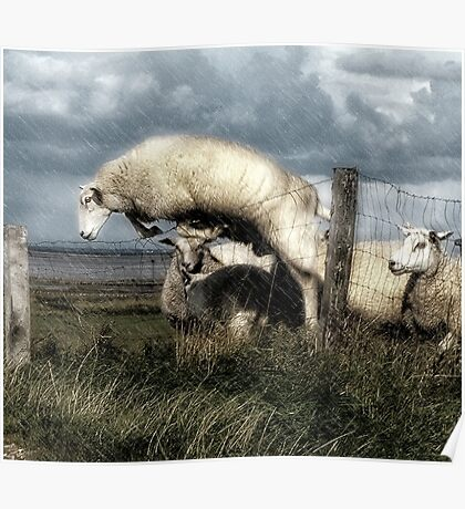 The woolly jumper Poster