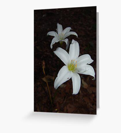 Atamasca Lilies Greeting Card