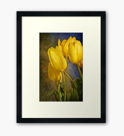 Katie's Tulips Framed Print