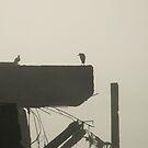 foggy day (1) by lukasdf