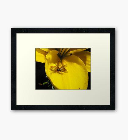 MINE! Framed Print
