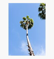 Palm tree in Marrakech Photographic Print