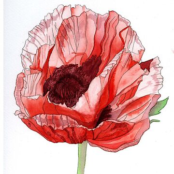 Single Red Poppy by esvb