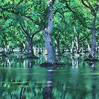 Flooded Walnut Orchard by Buckwhite