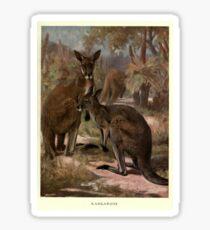 Vintage Kangaroo Painting (1909)  Sticker