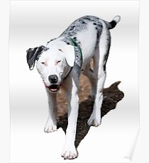 Catahoula Cur - State Dog of Lousiana Poster