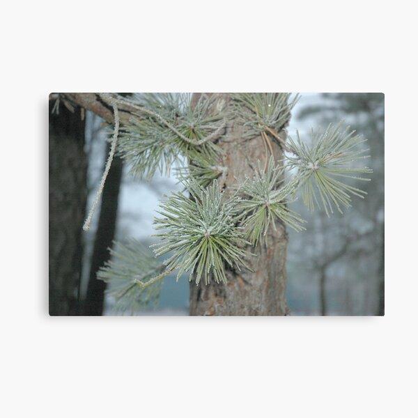 Frosty Pine Branch - 2  Metal Print