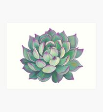 Lámina artística Planta suculenta