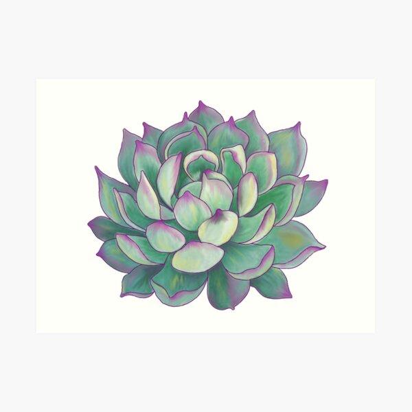 Sukkulente Pflanze Kunstdruck