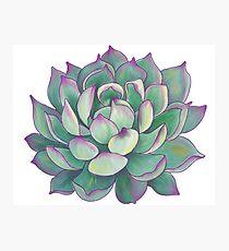 Sukkulente Pflanze Fotodruck