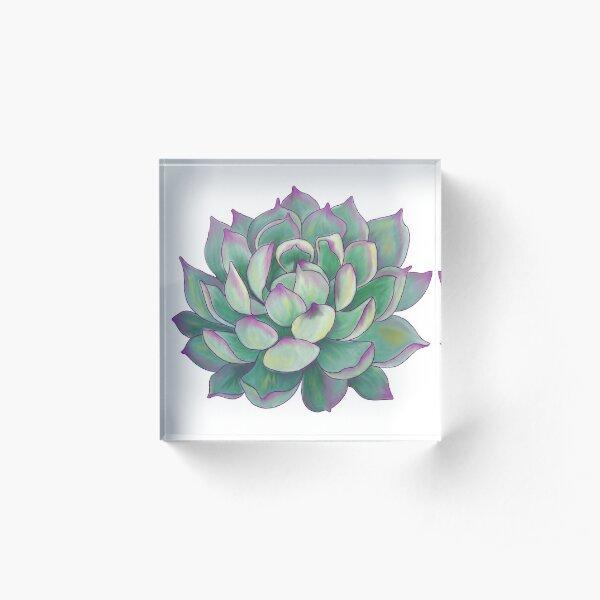 Succulent plant Acrylic Block