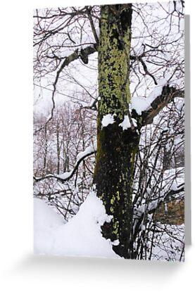 Mossed tree by Dulcina