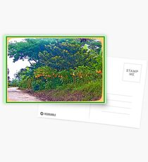 Back Road with Trumpet Flowers Postcards