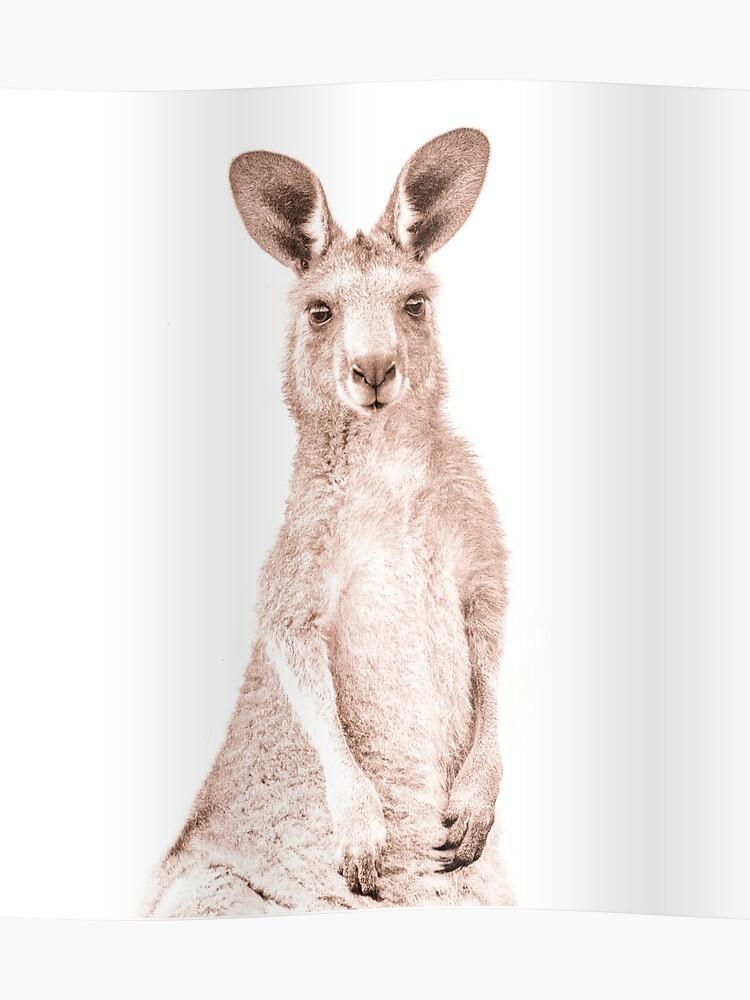 Baby Kangaroo - Joey Kangaroo Art - Kangaroo Decor - Australian Wildlife -  Australiana Animals | Poster