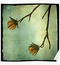Tree Flowers Poster