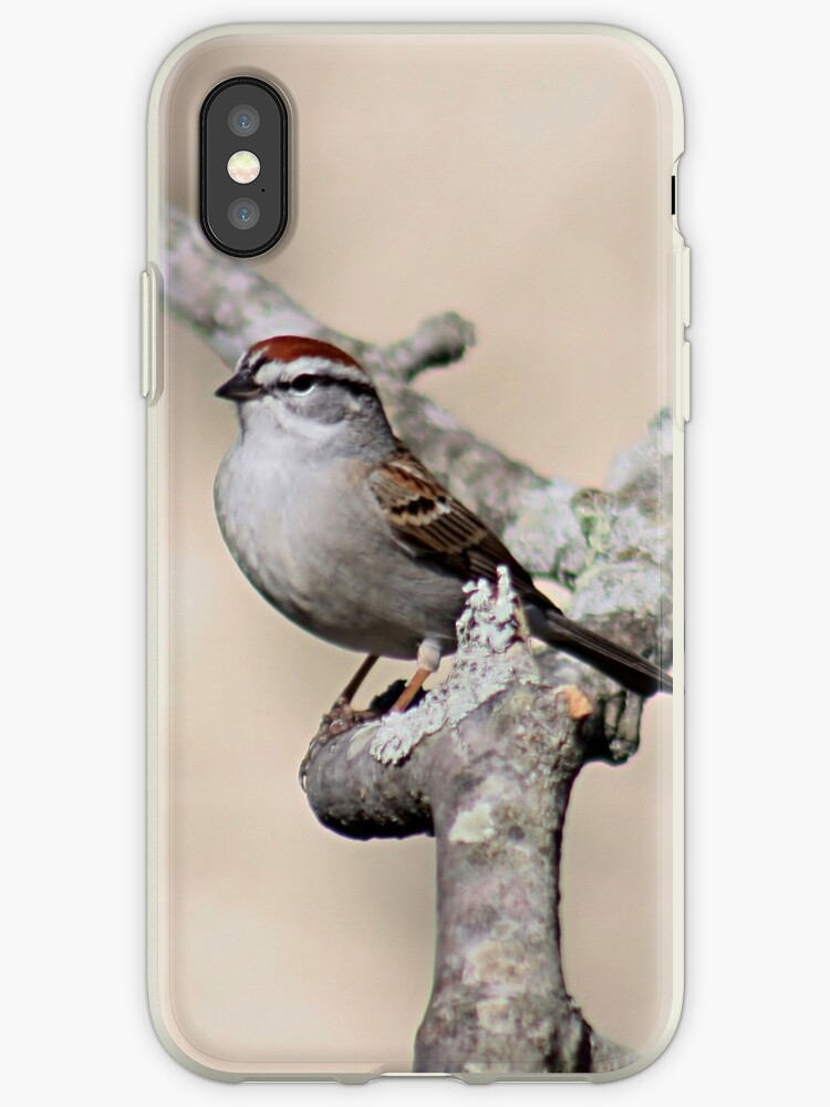 Chipping sparrow by Linda Crockett