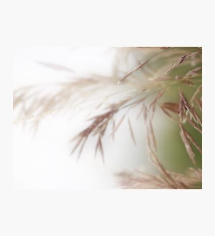 Ever so softly Photographic Print