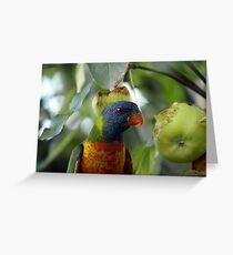 "Rainbow Lorikeet ""Trichoglossus haematodus"" Greeting Card"
