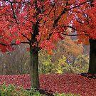 Autumn in Newark by Gayle Dolinger