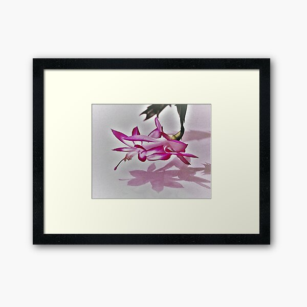 Pink Christmas Cactus Framed Art Print