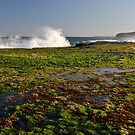Mona Vale / low tide / sunset by Alex Marks