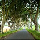 The Dark Hedges, Northern Ireland by Ludwig Wagner