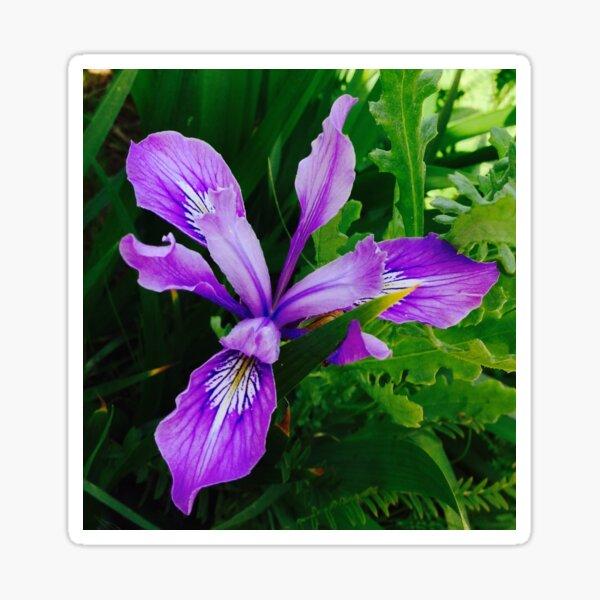 Wild Purple Iris Sticker