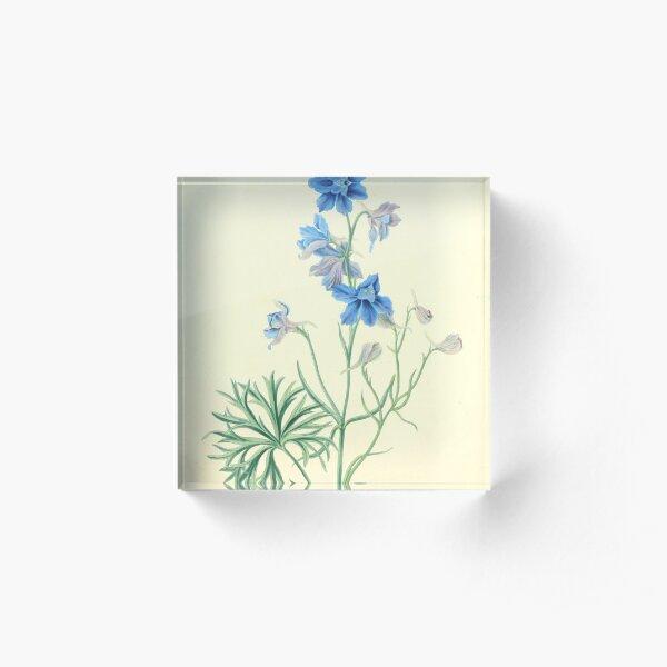 Roscoe, Margaret (1786-1840) - Floral Illustrations of the Seasons 1831 - Delphinium Grandiflorum Acrylic Block