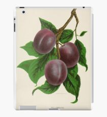 Canadian Horticulturalist 1888-96 - Fellemburg Plums iPad Case/Skin