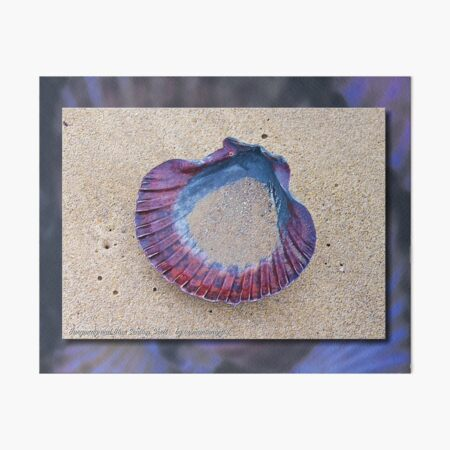 GALERIEBORD ~ MICRO TALE ~ Burgundy and Blue Scallop Shell by tasmanianartist Art Board Print