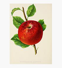 Canadian Horticulturalist 1888-96 - Hubbardston Nonsuch Apple Photographic Print