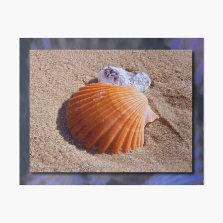 GALERIEBORD ~ MICRO TALE ~ Orange-coloured Scallop Shell by tasmanianartist Art Board Print