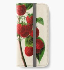 Canadian Horticulturalist 1888-96 - Raspberries iPhone Wallet/Case/Skin